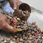 Cambodia:  Fresh Water Clams Are A Street Delicacy