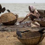Sri Lanka Fishing Village at Negombo
